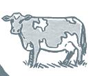 Mini Grey Cow