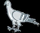 Pigeon standing