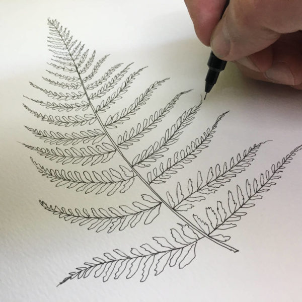 Fern Illustration Print