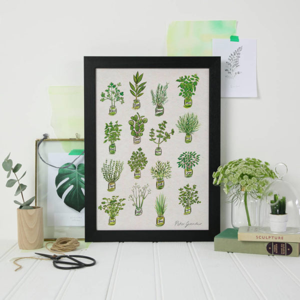 Herb Illustration Print